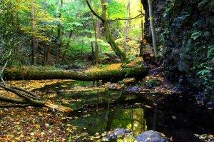forest stream - Barka Fabianova